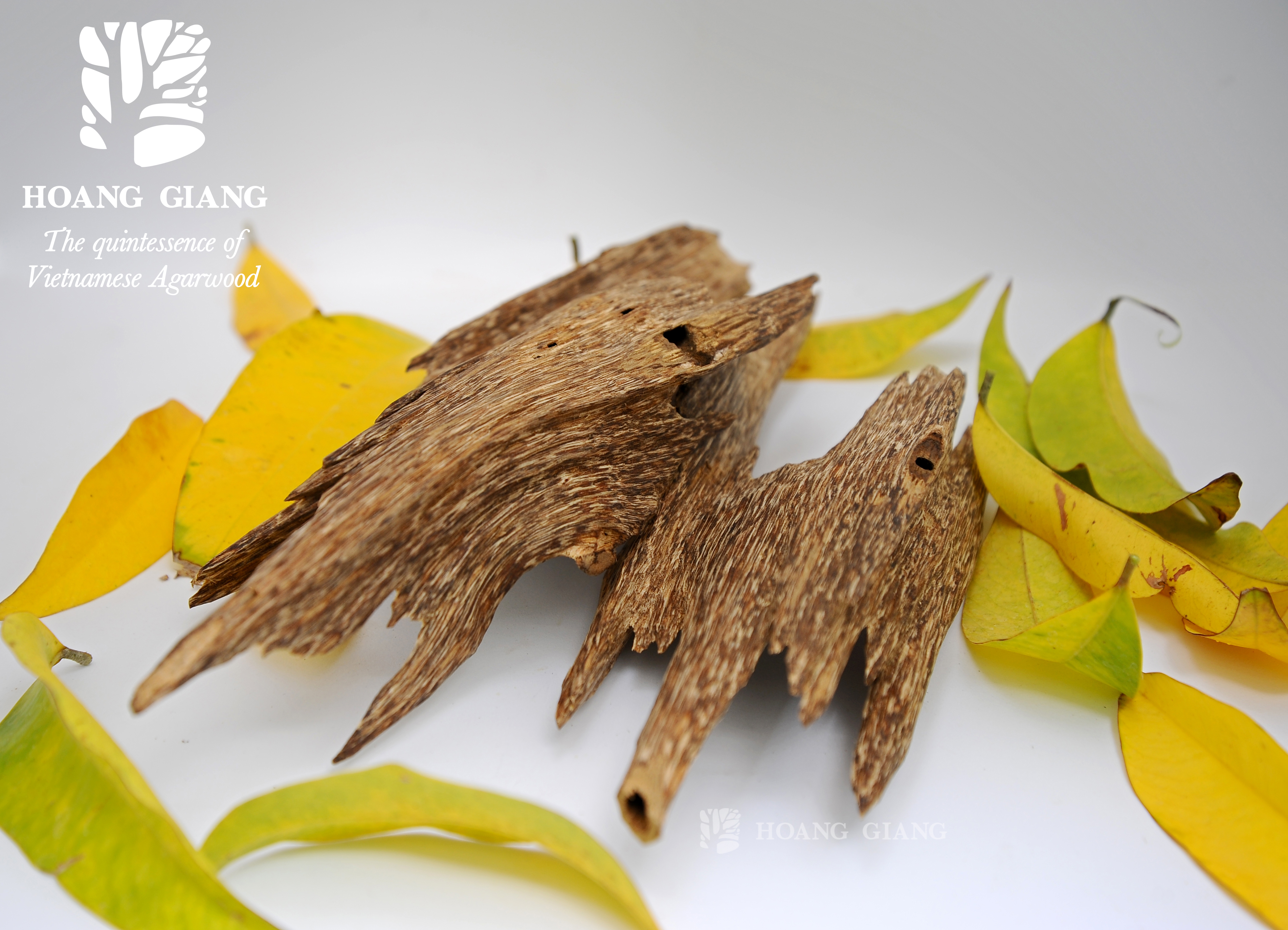 Flavor Of Spring – The Delicate, Passionate Spicy Sweet Of