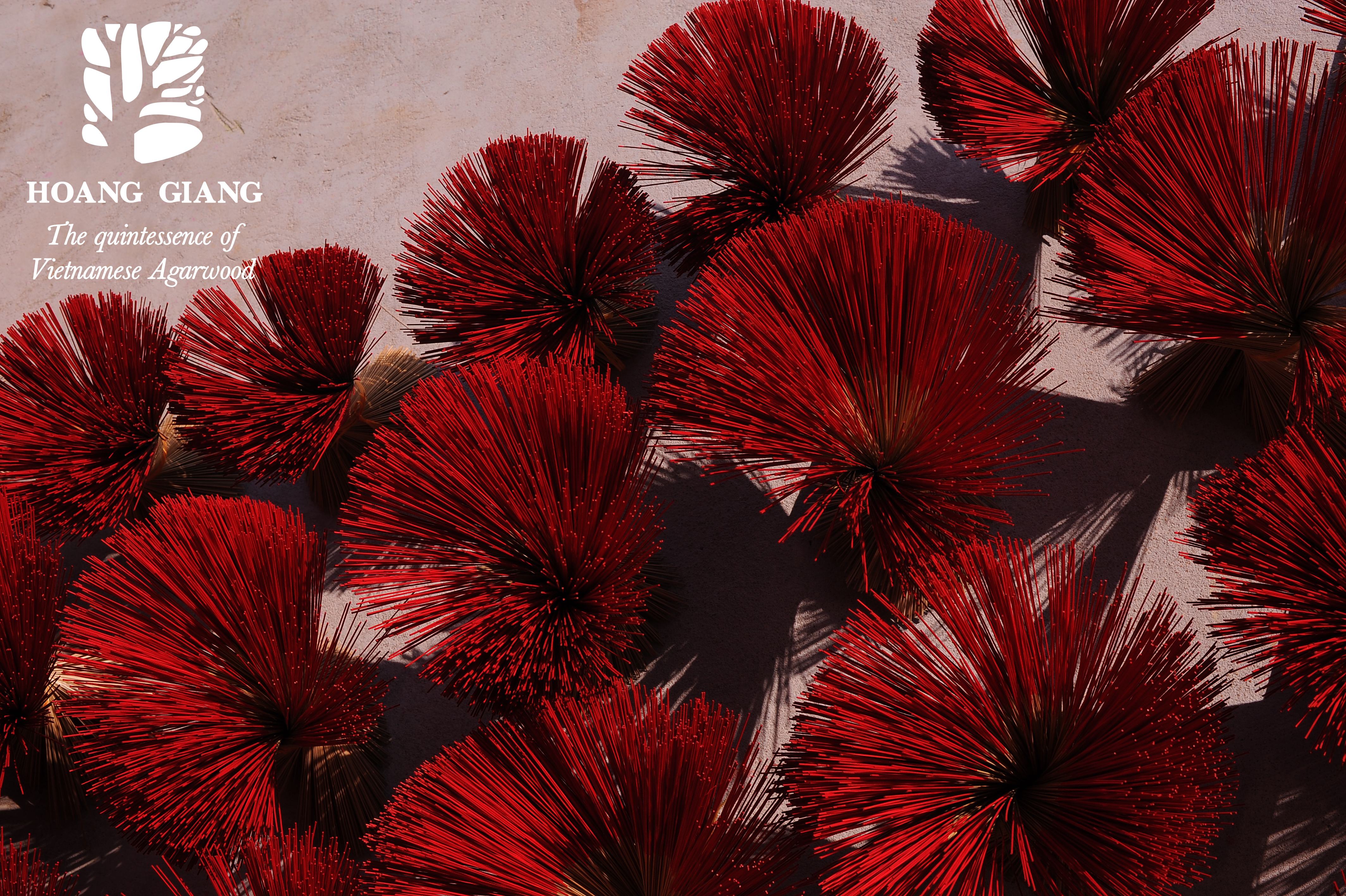The Featured Bright Red Color Of The Stick Of Haga Natural Incense Stick Hoang Giang Agarwood Ltd